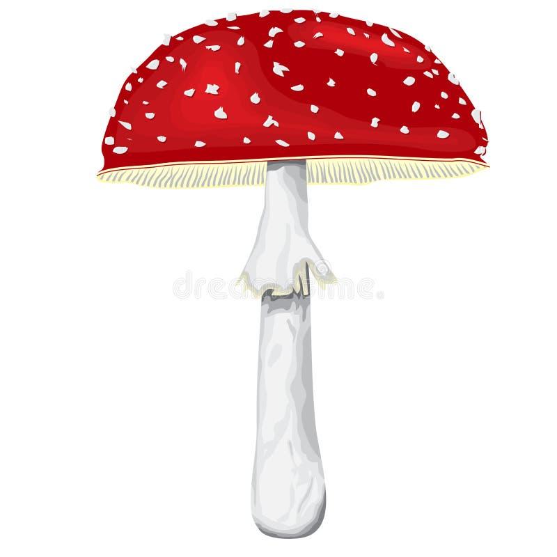 Мух-пластинчатый гриб с крышкой и ногой иллюстрация штока