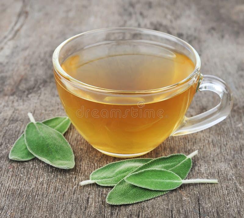 Мудрый чай стоковые фото