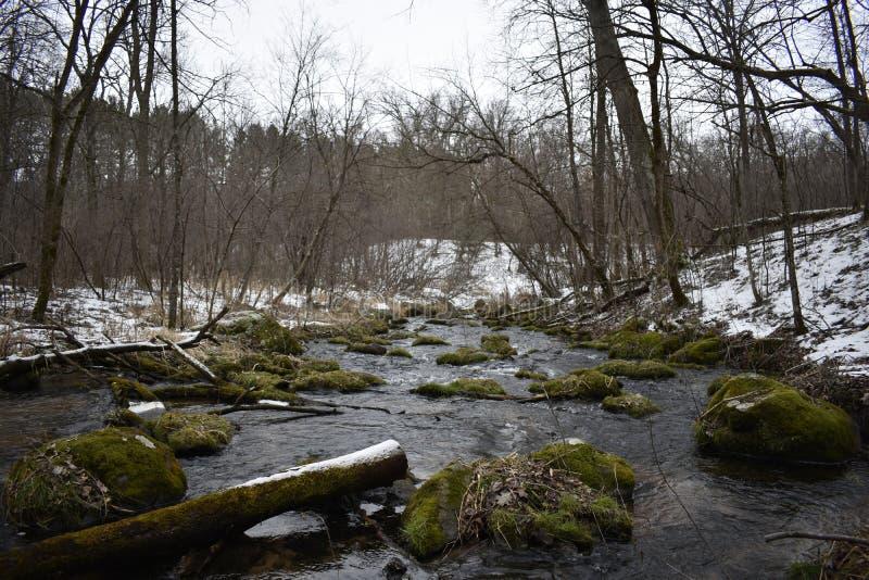 Мшистое река стоковые фотографии rf