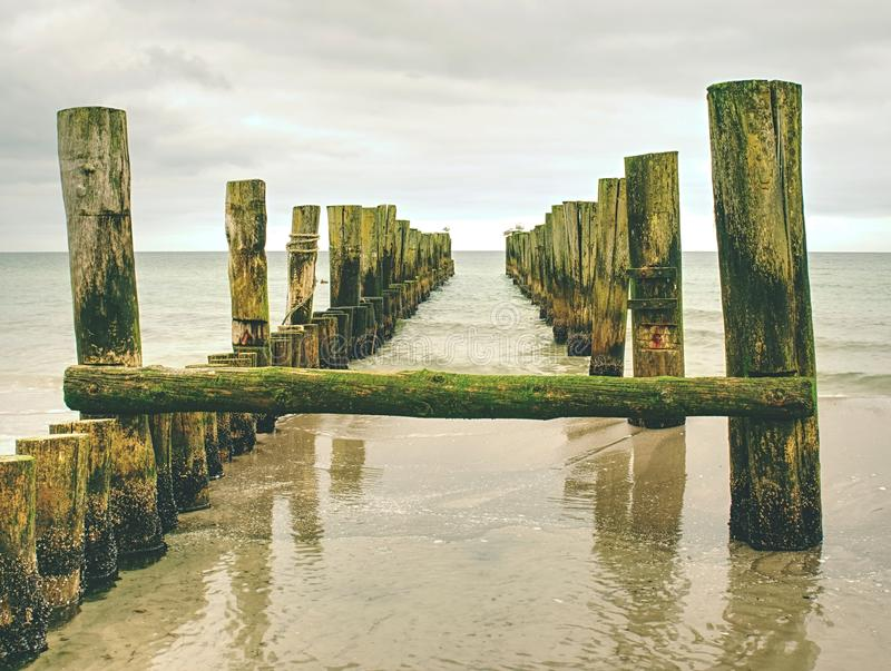 Мшистые поляки волнореза в ровной воде моря в пределах windless Песчаный пляж стоковое фото rf