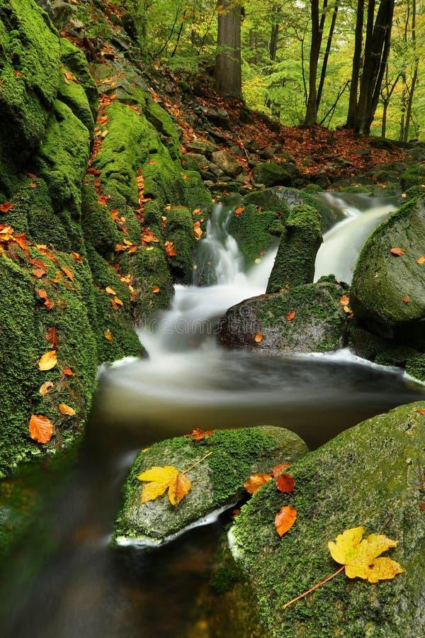 Мшистый поток с листьями стоковые фотографии rf