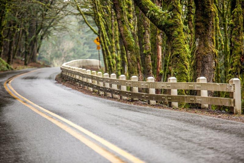 Мшистым дорога выровнянная деревом стоковые изображения