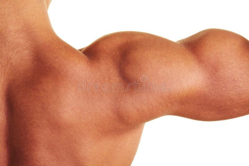 мыжское нагое плечо стоковое фото