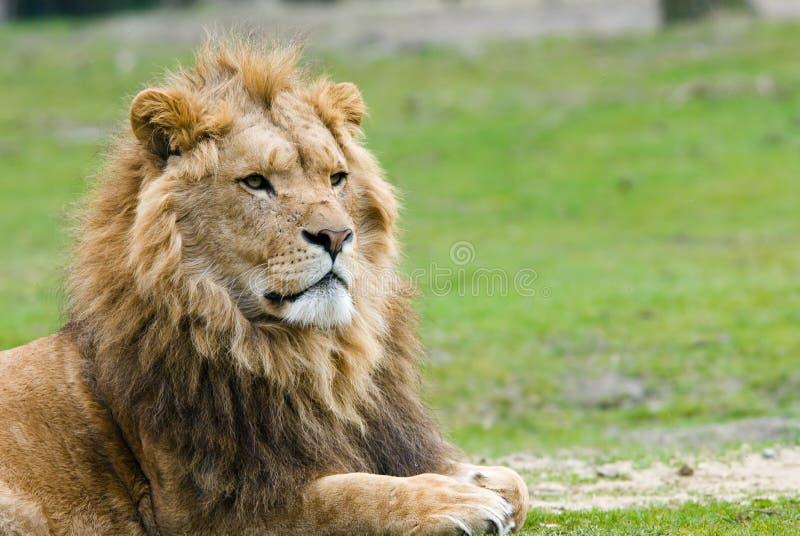 Мыжской лев