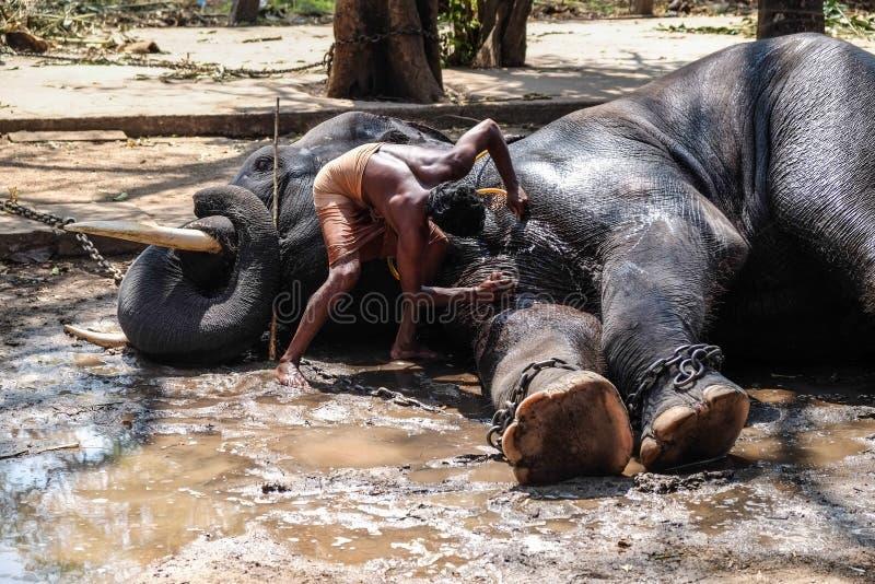 Мытье слона стоковая фотография