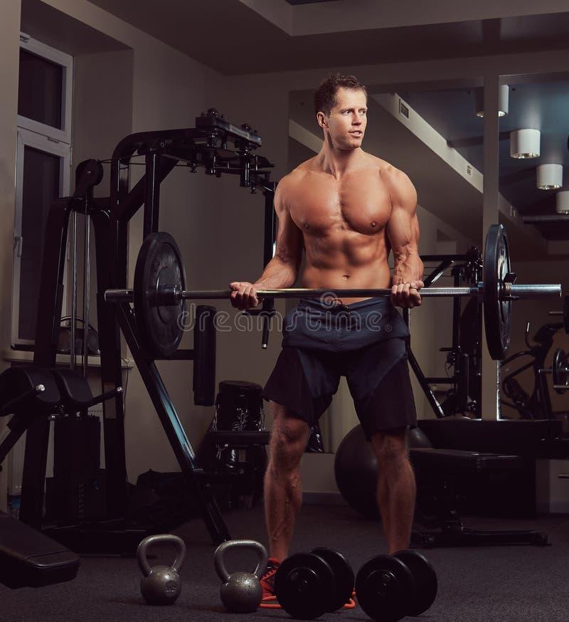 Мышечный без рубашки мужчина культуриста поднимая штангу на бицепсе в спортзале стоковая фотография