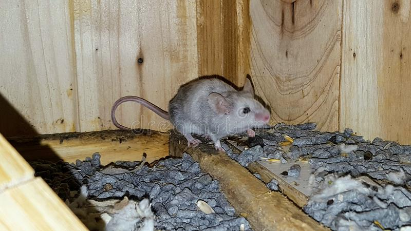 мыши стоковые фото
