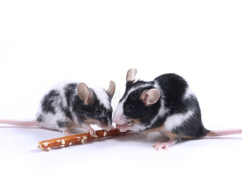 мыши стоковое фото rf