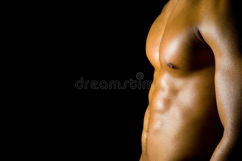 мышцы adbominal стоковые изображения rf