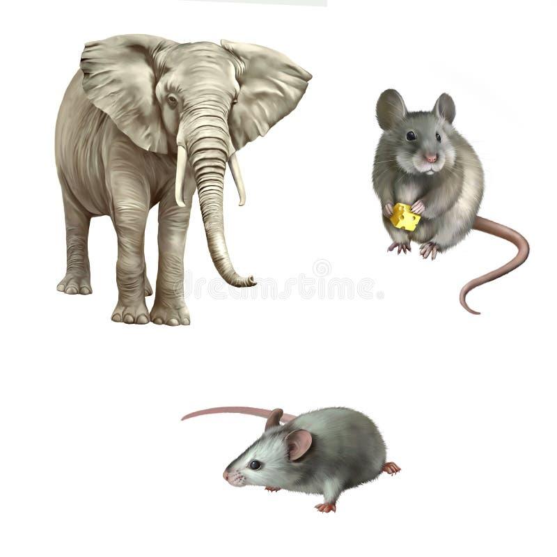 Мышь, африканский слон (africana Loxodonta) стоковые фотографии rf