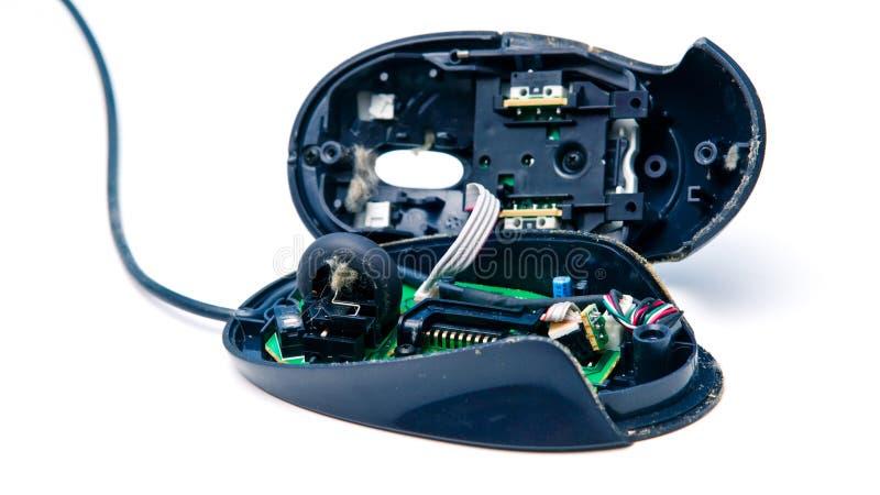 мышь компьютера пакостная стоковые фотографии rf