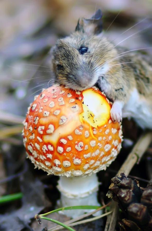 Download Мышь с грибком стоковое фото. изображение насчитывающей лето - 45355380