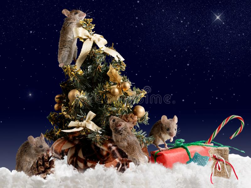 Мышь 4 украшает рождественскую елку к ноча на небе предпосылки звёздном стоковые изображения rf