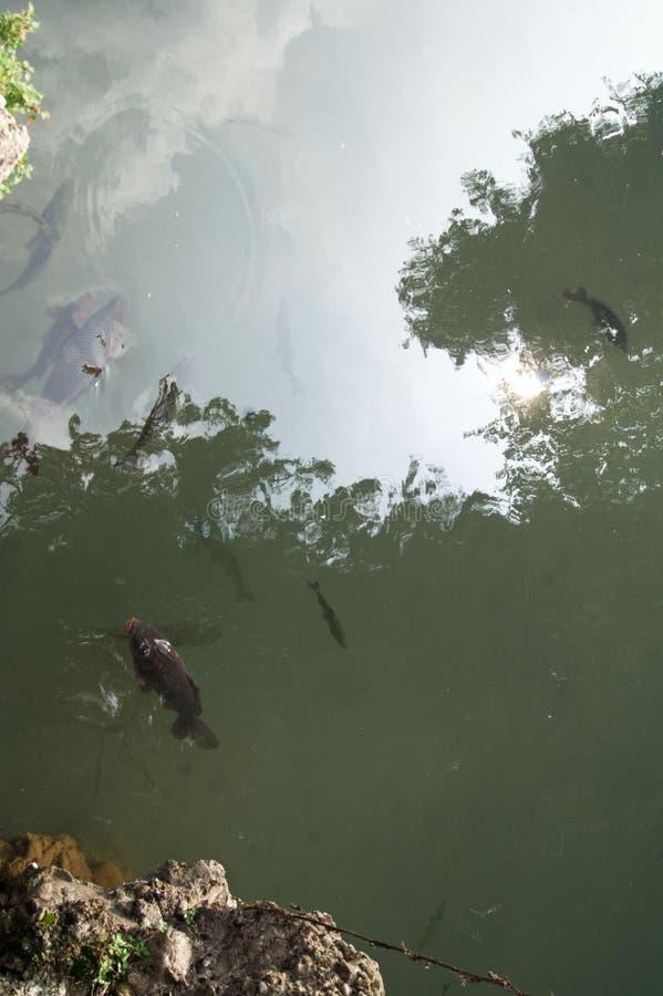 Download Мы также любимчики и мы хотим едим Стоковое Изображение - изображение насчитывающей wildlife, angoras: 81801463
