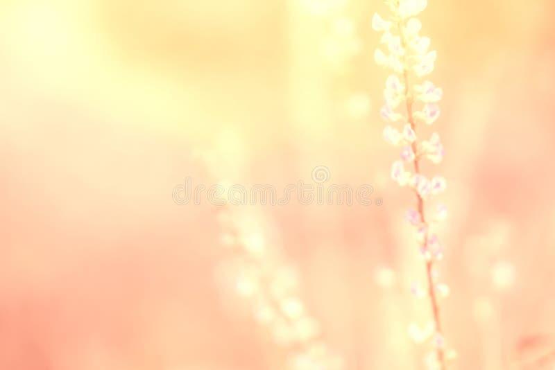 Мягкая осень фиолетовая, фиолетовая предпосылка фокуса природы цветка травы стоковое фото
