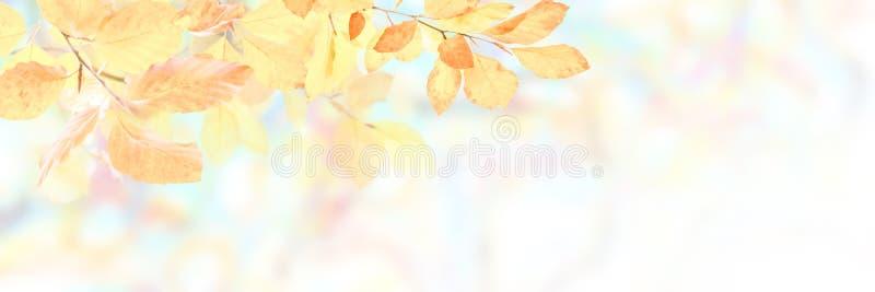 Мягкая предпосылка природы осени стоковые изображения