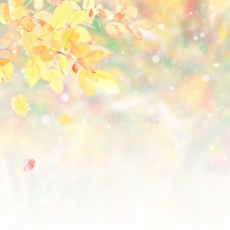 Мягкая предпосылка природы осени стоковая фотография rf