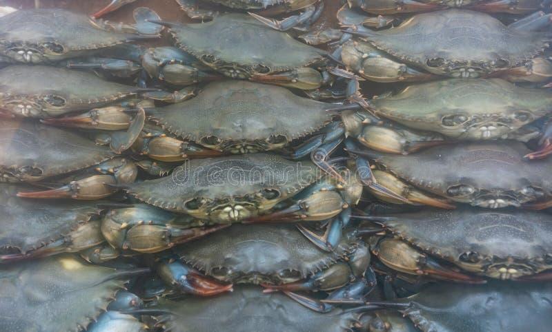 Мягкая раковина crabs для продажи стоковые фото