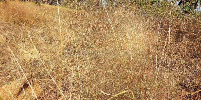 Мягкая трава стоковое изображение rf