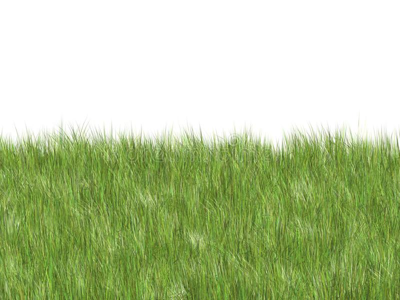 Мягкая трава стоковые фотографии rf