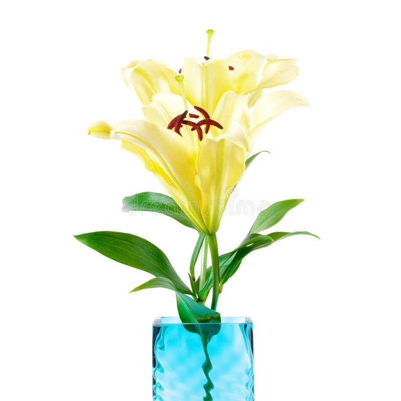 Мягкие желтые цветки лилии в квадратной вазе стоковое изображение rf