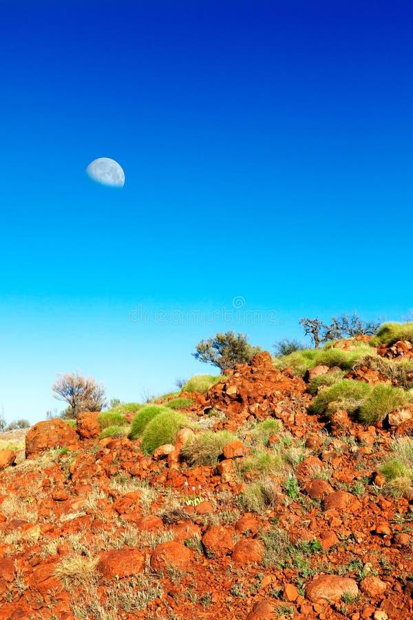 Мягкие зеленые кусты на оранжевом горном склоне в австралийском захолустье с стоковые изображения rf