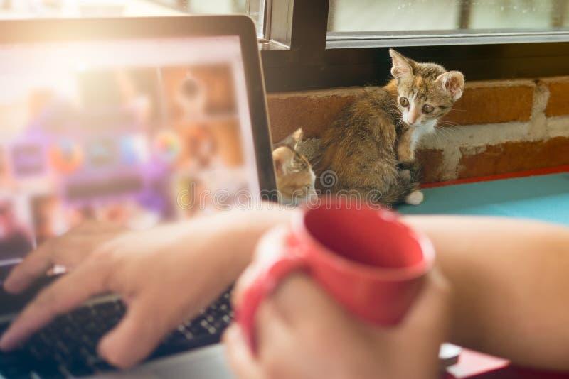 Мягкие коты младенца изображения при человек работая на компьтер-книжке и кофе питья стоковое изображение rf