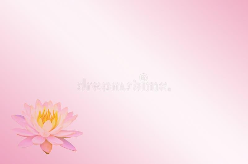 Мягкие лотос фокуса или цветок лилии воды на розовой пастельной абстрактной предпосылке иллюстрация вектора
