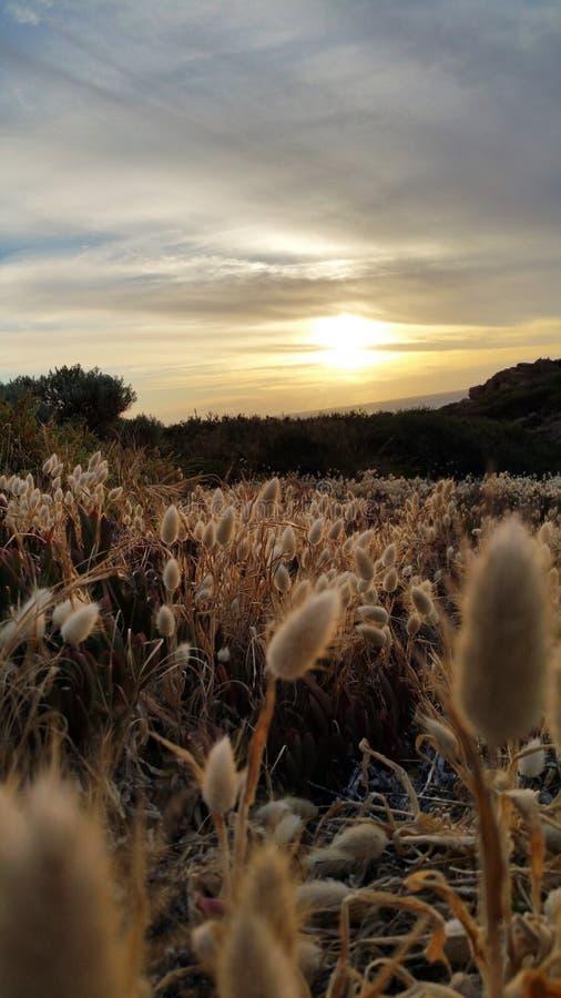 Мягкий заход солнца стоковое фото