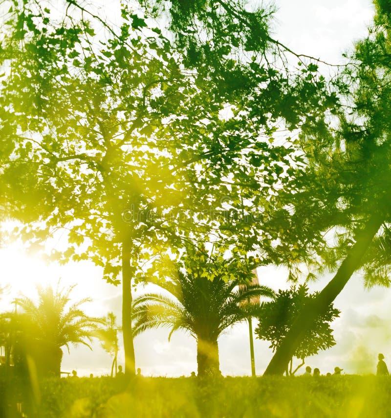 Мягкий зеленый абстрактный фон природы стоковые фото