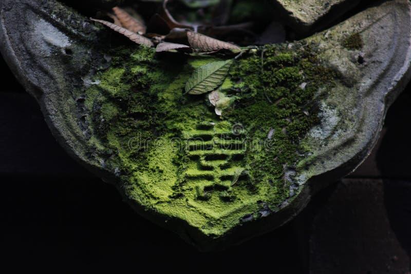 Мягкий мох покрывая задние плитки и быть искупанным солнечным светом стоковое изображение rf