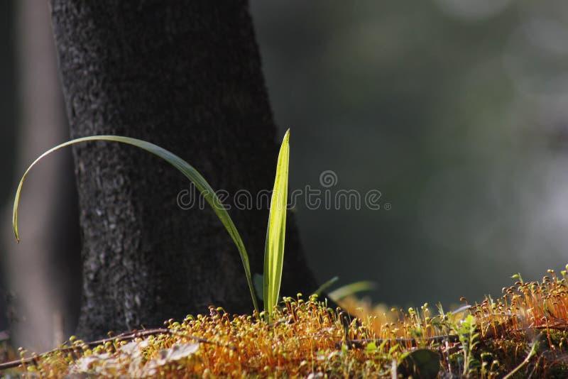 Мягкий мох покрывая задние плитки и быть искупанным солнечным светом стоковая фотография