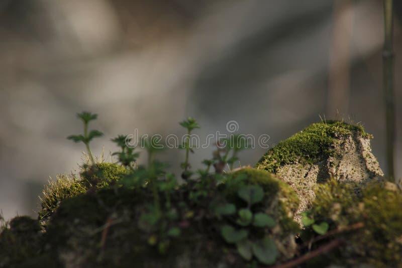 Мягкий мох покрывая задние плитки и быть искупанным солнечным светом стоковые изображения rf