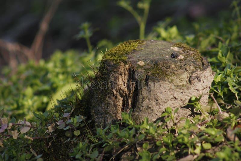 Мягкий мох покрывая задние плитки и быть искупанным солнечным светом стоковое изображение
