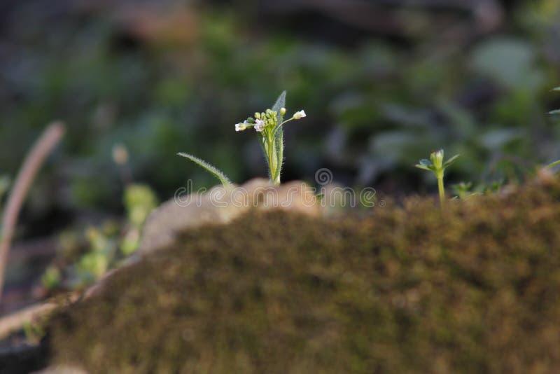 Мягкий мох покрывая задние плитки и быть искупанным солнечным светом стоковое фото