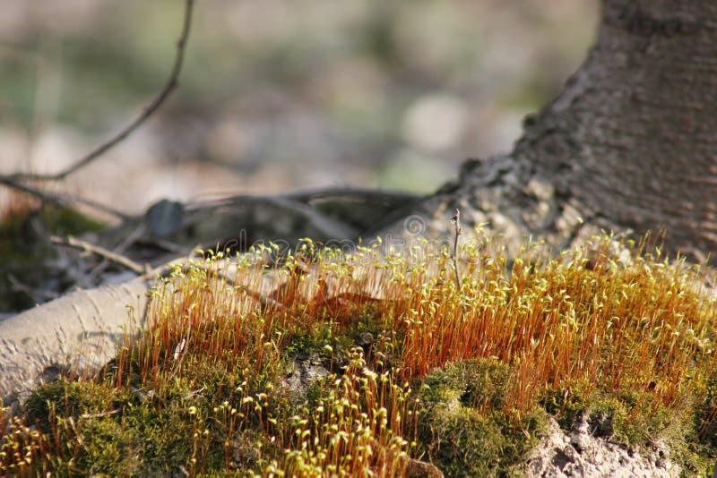 Мягкий мох покрывая задние плитки и быть искупанным солнечным светом стоковая фотография rf
