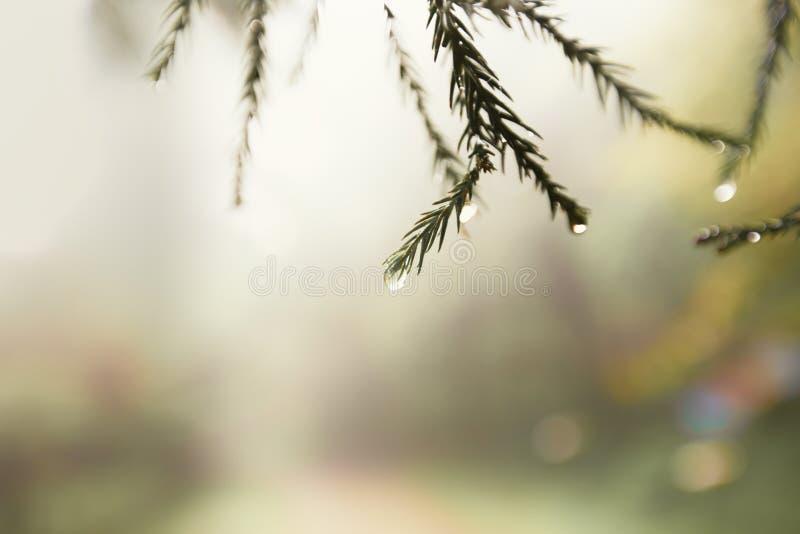 Мягкое фоновое изображение капелек дождевой воды падая листья стоковые изображения