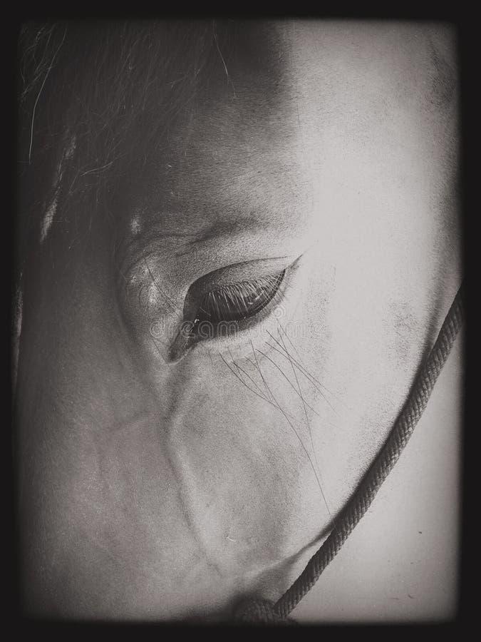 Мягкое equine стоковое изображение rf