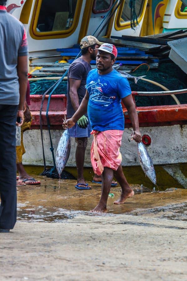 Мясо тунца принося для того чтобы приземлиться от шлюпок в гавани Mirissa, Шри-Ланке стоковая фотография