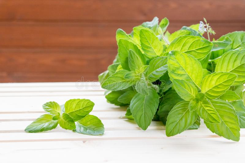 Мята Пук свежих зеленых органических лист мяты на крупном плане деревянного стола Селективный фокус Пипермент в малой корзине дал стоковое изображение