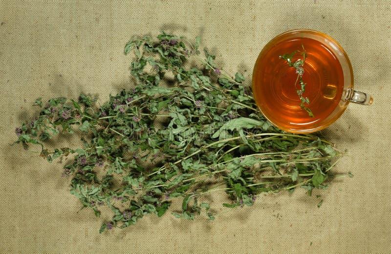Мята, spearmint сухие травы Фитотерапия, phytotherapy medici стоковые изображения rf