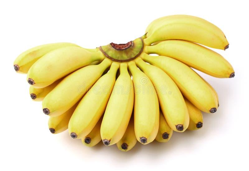 Младенец банана в крупном плане стоковая фотография
