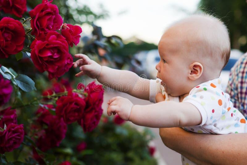 Младенец в саде стоковое изображение