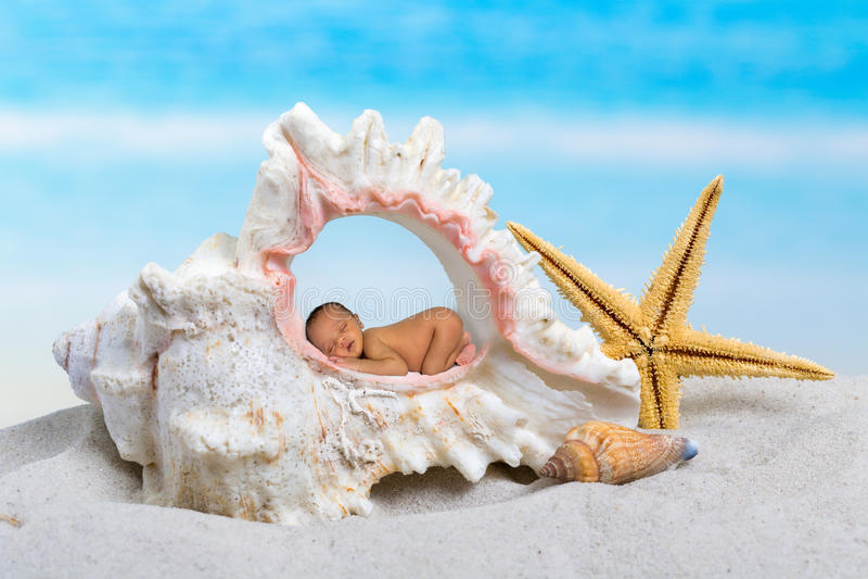 Младенец в seashell стоковое изображение