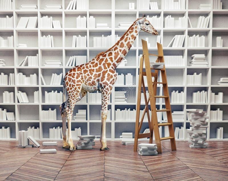 Младенец жирафа в библиотеке иллюстрация вектора