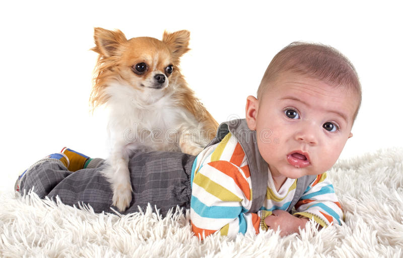 Младенец и чихуахуа стоковое фото rf