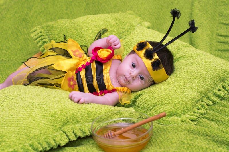 Младенец пчелы меда стоковые изображения