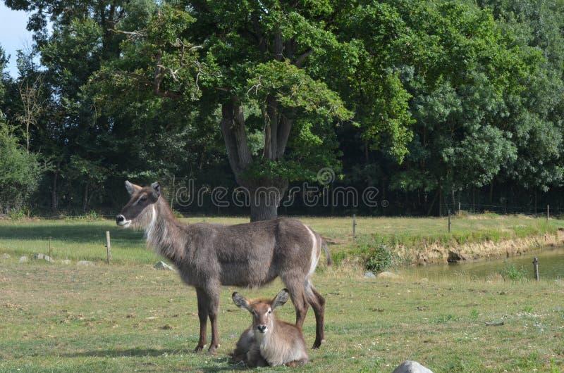 млекопитающие стоковые фотографии rf
