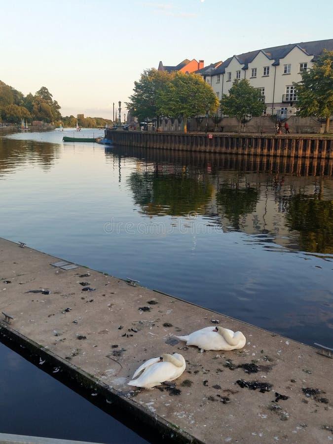 Набережная Эксетера на реке Exe в Англии стоковые изображения rf