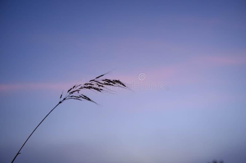 Наблюдайте восход солнца на траве стоковые изображения rf